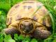 Как определить возраст сухопутной черепахи