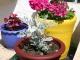 Как сделать кашпо для цветов своими руками