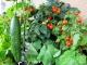 Как оформить огород на окне