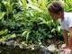 Как благоустроить сад