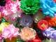 Как делать цветок из салфетки