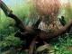 Как очистить аквариум от зеленых водорослей на стеклах