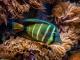 Почему в аквариуме с рыбками быстро мутнеет вода
