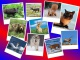 Какие есть программы для создания фотоколлажа