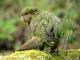 Самый большой в мире попугай