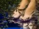 Как завести рыбок, которые делают массаж