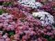 Как вырастить экзотические цветы на даче