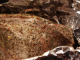 Запеченное мясо в фольге в духовке: рецепт приготовления