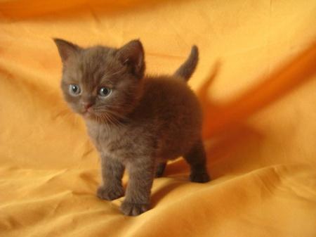 как устранить кошачий запах в доме