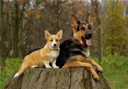как вылечить собаку от ушного клеща