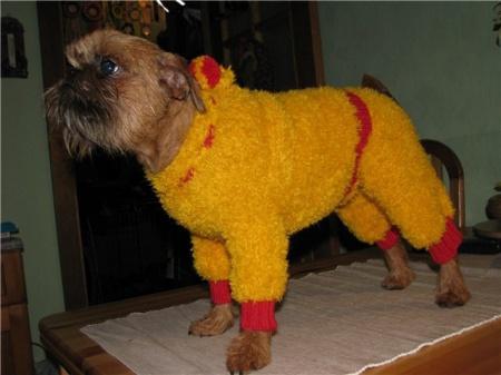 связать одежду для собак