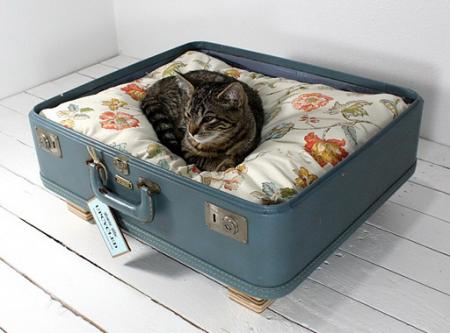 сделать место для кошки