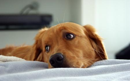 как определить какой породы собака