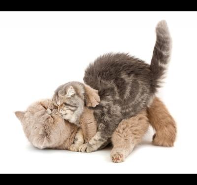 кот и кошка как отличить фото