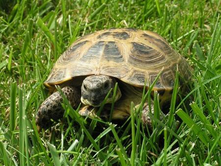 домашние черепахи водяние як их розличать девочка чи мальчик