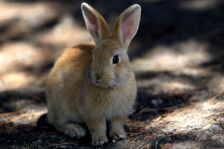 ловля зайца петлями