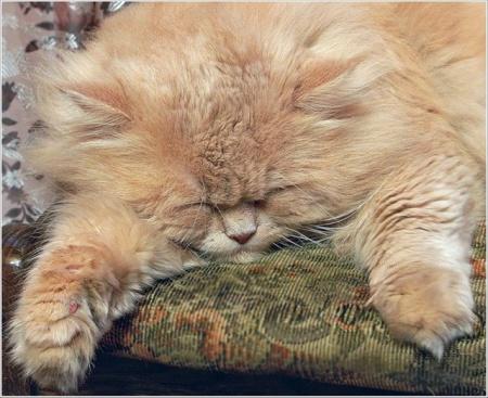 как определить возраст кота