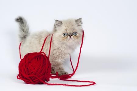 тренажер для кошки своими руками