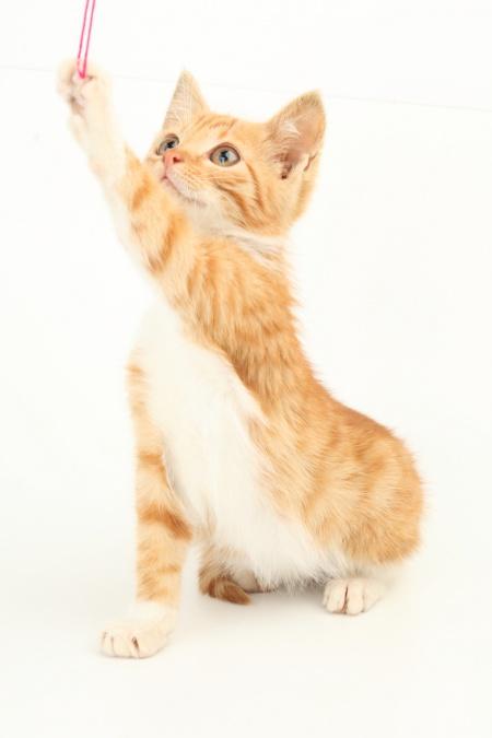 как назвать котёнка- мальчик