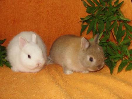 как различить кроликов по полу