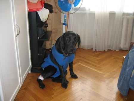 как поставить катетер собаке