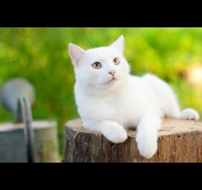 как можно назвать белого обычного кота