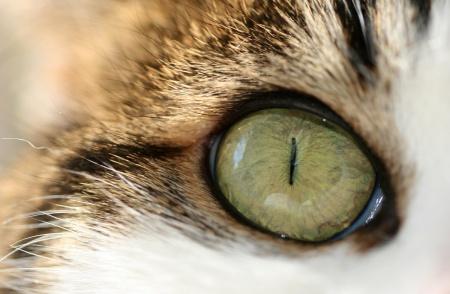 для заживления раны глаза у кота