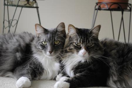 как пожружить двух котов