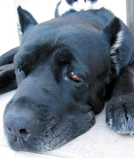 как сделать собаке клизму