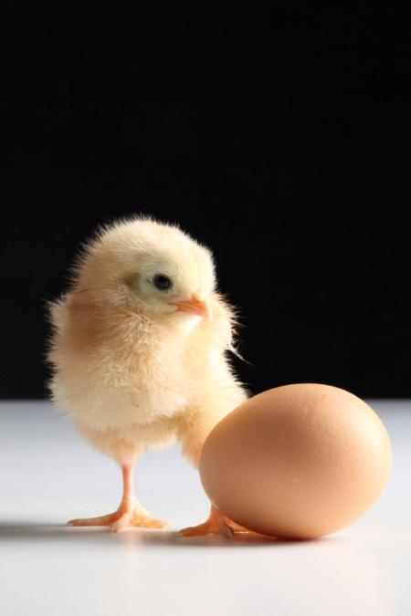 как сделать клетку для цыплят с наседкой фото