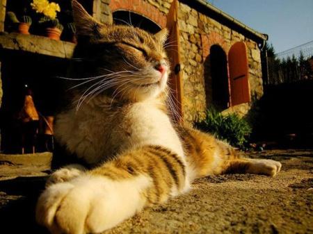 как научиться понимать кошек