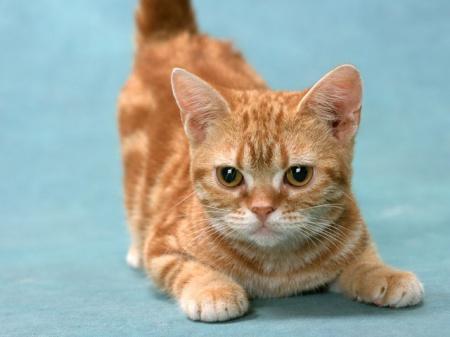 как уменьшить запах в кошачьем туалете советы