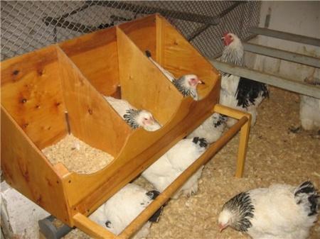 гнездо для несушек