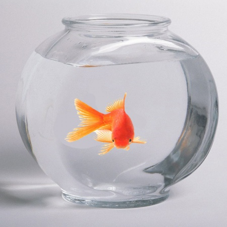 как кормить рыбок мотелем