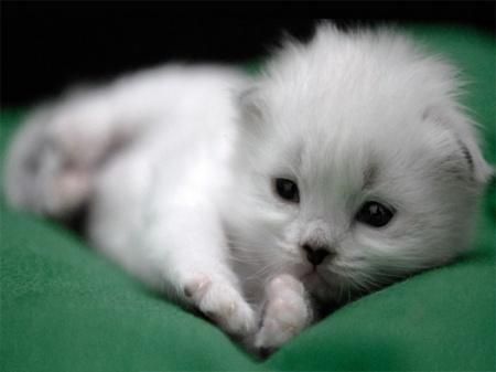 имя для кота мальчика белого