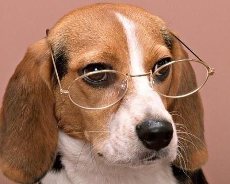воспитать умную собаку